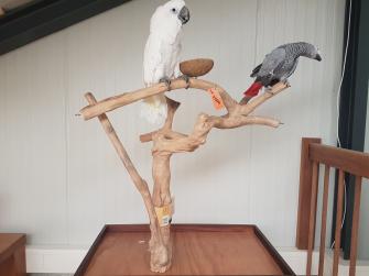 Beste Papegaaien.nl - Bekijk ons aanbod vogel producten. AE-84