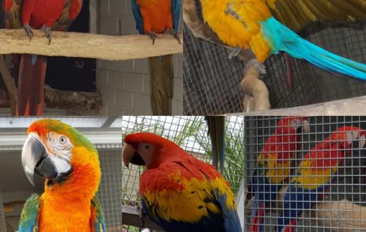 Papegaaien nl - Birdexport
