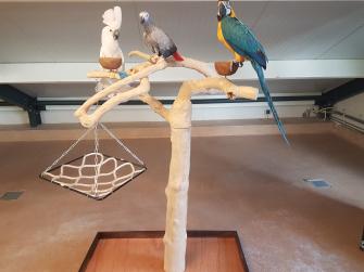 Wonderlijk Papegaaien.nl - Bekijk ons aanbod vogel producten. VV-64