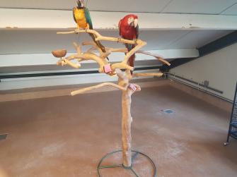 Wonderlijk Papegaaien.nl - Bekijk ons aanbod vogel producten. IZ-46